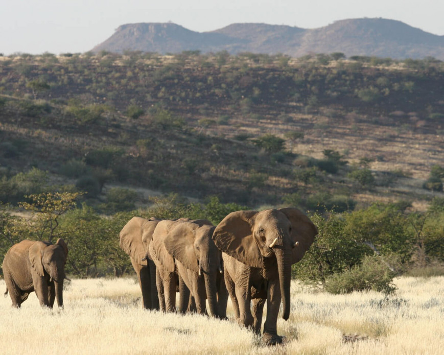 "Track endangered desert-adapted elephant at <strong class=""text-green"">Camp Onduli</strong>"