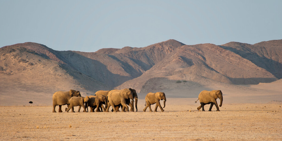 Namibia Under Canvas Safari