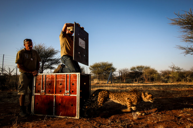 Africat Foundation