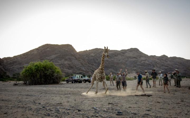 Conservation Safaris